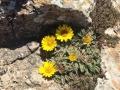 Blumen auf den Küstenflächen