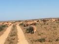 Unterwegs treffen wir auf Schafherden