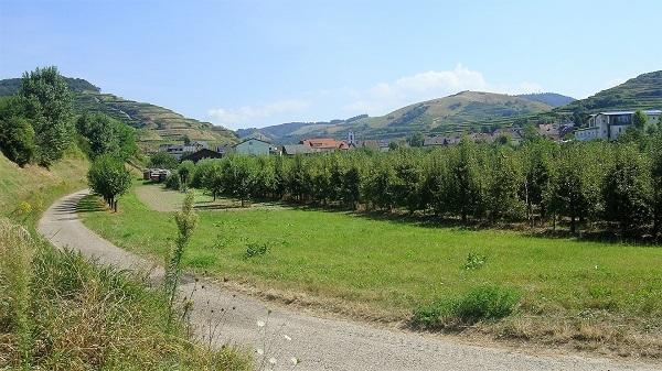 Der Weg führt an Obstgärten vorbei