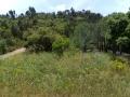Dichte Vegetation