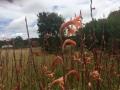 Wunderschöne Blumen am Weg
