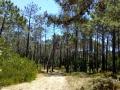 Der Weg führt durch einen Kiefernwald