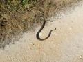 Überraschung: Zwei Schlangen am Wegrand