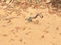 Und zur Abwechslung eine Schlange