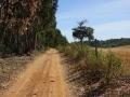Der Weg führt einem Eukaliptuswald entlang