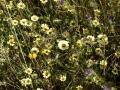 Biodiversität am Wegrand