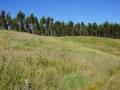 Blumenwiese und Eukaliptuswald