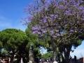 Im Park des Castelo