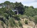 Wald oberhalb der Plage Ste. Marguerite, Pornichet